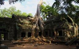 Cambodia Stock Image
