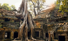 Cambodia Angkor. Ancient architecture in the jungle Royalty Free Stock Image