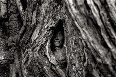 Cambodia. Angkor Wat Royalty Free Stock Photo