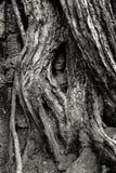 Cambodia. Angkor Wat Royalty Free Stock Image
