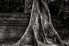 Cambodia. Angkor Wat Stock Photo