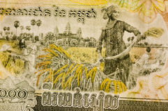 Cambodia Banknote Rice Harvesting Stock Photography
