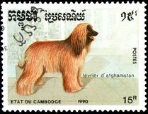 CAMBODIA - CIRCA 1990: postage stamp, printed in Cambodia, shows a Afghan Hound Stock Images