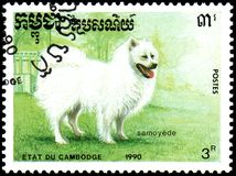 CAMBODIA - CIRCA 1990: postage stamp, printed in Cambodia, shows a Samoyed Dog Royalty Free Stock Photo