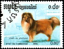 CAMBODIA - CIRCA 1990: postage stamp, printed in Cambodia, shows a Shetland dog Stock Image