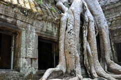 Cambodia - Detail of Ta Prohm temple Royalty Free Stock Photo