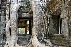Cambodia - Detail of Ta Prohm temple. Angkor Wat, Siem Reap area (Cambodia) - Detail of Ta Prohm temple, also called Tomb Raider temple, where silk-cotton trees Royalty Free Stock Photos