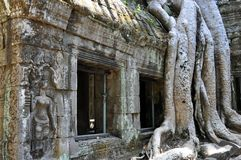 Cambodia - Detail of Ta Prohm temple. Angkor Wat, Siem Reap area (Cambodia) - Detail of Ta Prohm temple, also called Tomb Raider temple, where silk-cotton trees Stock Images