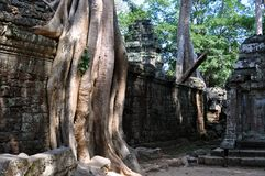 Cambodia - Detail of Ta Prohm temple Stock Photography