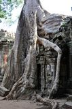 Cambodia - Detail of Ta Prohm temple Stock Photo