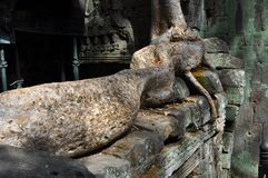 Cambodia - Detail of Ta Prohm temple. Angkor Wat, Siem Reap area (Cambodia) - Detail of Ta Prohm temple, also called Tomb Raider temple, where silk-cotton trees Stock Photos