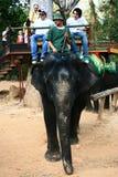cambodia elefant som trekking Arkivbild