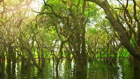 Cambodia. Flooded forest and wooden bridge. Stock Photography