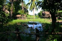 cambodia houses skördar nära lantlig siem Arkivbild