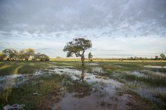 Free CAMBODIA KAMPONG THOM LANDSCAPE FIELD Stock Photography - 121075132