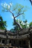 Cambodia  la prong  temple. Cambodia bluebird day la prong temple Royalty Free Stock Photography