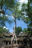 Cambodia  la prong  temple. Cambodia bluebird day la prong temple  person lone tree Royalty Free Stock Photography