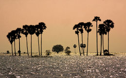 Cambodia landscape. Flooding fields in Cambodia sunset. SEptember 2011 Royalty Free Stock Photos