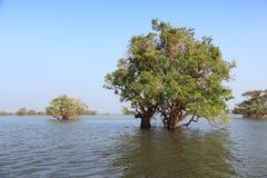 Lake in Cambodia. Cambodia - landscape of Tonle Sap lake. Southeast Asia Stock Photography
