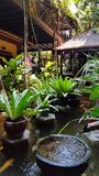 Traditional water garden in a Cambodian home. Water an big leafed plants are used to give cool, shade and movement. Cambodia, Phnom Phen - March 2016 royalty free stock image