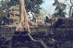 cambodia prohm ta Arkivfoto
