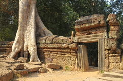cambodia prohm ta Zdjęcia Stock