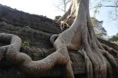 cambodia prohm ta Zdjęcie Royalty Free