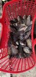 Cambodia& x27; s de krab is natuurlijke visserij stock foto's