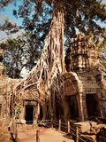 Cambodia, Siem Reap, Angkor Wat Temple, Ta Prohm stock images