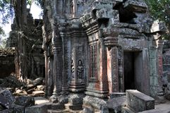 Cambodia - Ta Prohm temple. Angkor Wat, Siem Reap area (Cambodia) - Ta Prohm temple, also called Tomb Raider temple, where silk-cotton trees are consuming the Royalty Free Stock Photos