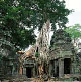 Cambodia trees roots Stock Images