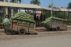 Cambodian Carst Loaded with Mangoes Royalty Free Stock Photography