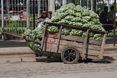 Cambodian Cart Loaded with Mangoes Stock Photo