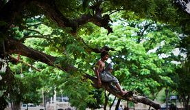 Cambodian children. Cambodian boys play in the trees stock photo