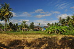 Cambodian countryside and rice paddy, Cambodia Royalty Free Stock Photography