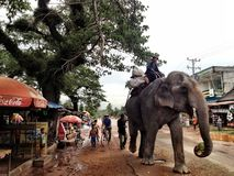 Cambodian Elephant in Village Royalty Free Stock Photos