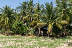 Cambodian farm Royalty Free Stock Image
