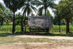 Cambodian farm Royalty Free Stock Photos