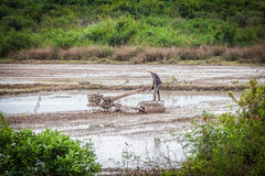 Cambodian farmer in a rice field Royalty Free Stock Photography