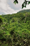 Cambodian jungle Stock Image