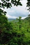 Cambodian jungle Royalty Free Stock Photo