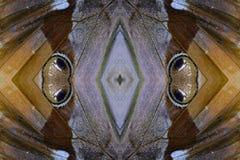 Cambodian Junglequeen Butterfly (Stichophthalma howqua) Stock Photos