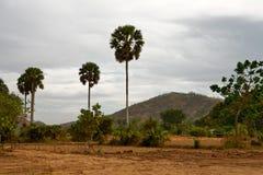 Cambodian landscape Royalty Free Stock Photo