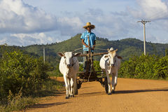 Cambodian oxcart Royalty Free Stock Images