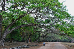 Cambodian Road. Road at Angkor temples complex, Siem Reap province; Cambodia Stock Photography