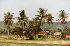 Cambodian rural countryside landscape. Cambodian rural countryside, Khmer housing and palm trees in Asia stock photography