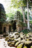 Cambodian temple ruins. Ta Phrom temple in Angkor in Cambodia Royalty Free Stock Photography
