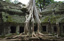 Cambodian temple of Ta Prohm Stock Images