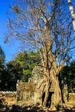 Cambodja Siem Reap Ta Somträd som spolar porten Arkivfoto