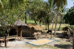 Cambodjaans landbouwbedrijf stock fotografie
